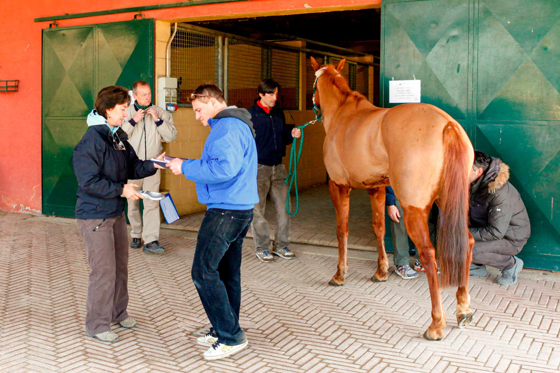"""VETERINARY PRE-EXAMINATIONS - The journey alongside the Barbaresco Iorzy begins one morning in February, in the veterinary clinic where the horse predictions are carried out, as required by the equine protocol. The horses admitted to the forecasts must be half-breeds of various origins, """"mestizos"""" with a percentage of English blood not exceeding 75%."""