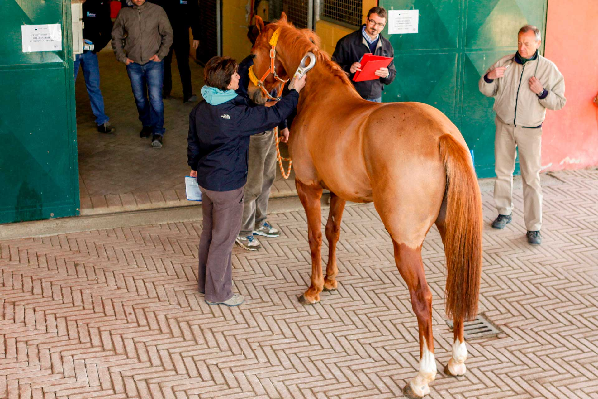 VETERINARY PRE-EXAMINATIONS - The horse is identified by electronic reading of the microchip applied under the mane.