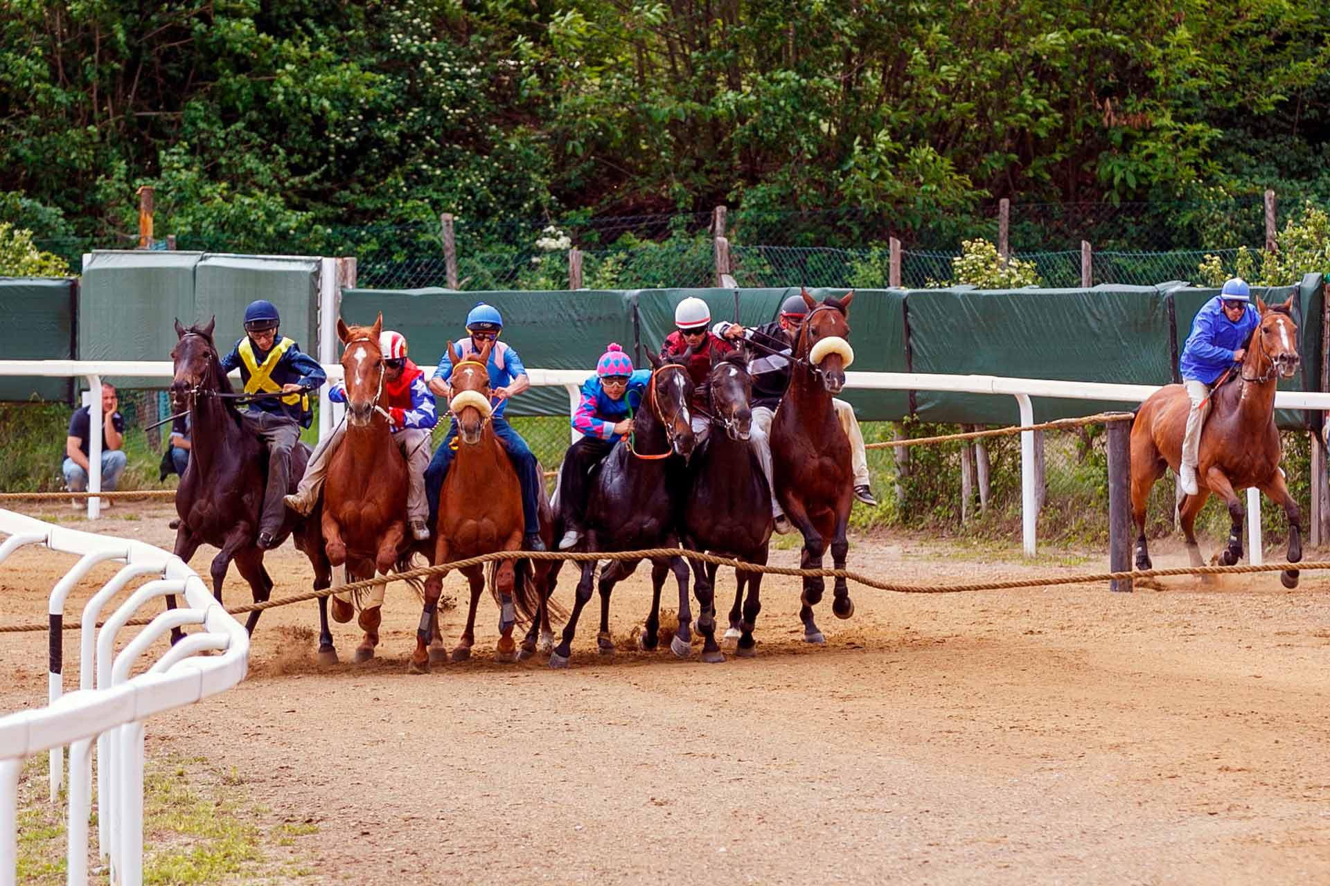 CORSE PROVA D?ADDESTRAMENTO - Viene simulata la corsa che si svolger? a Siena il giorno del Palio. Si testa il comportamento dei cavalli tra i canapi, insieme agli altri cavalli, nelle fasi che precedono la partenza.