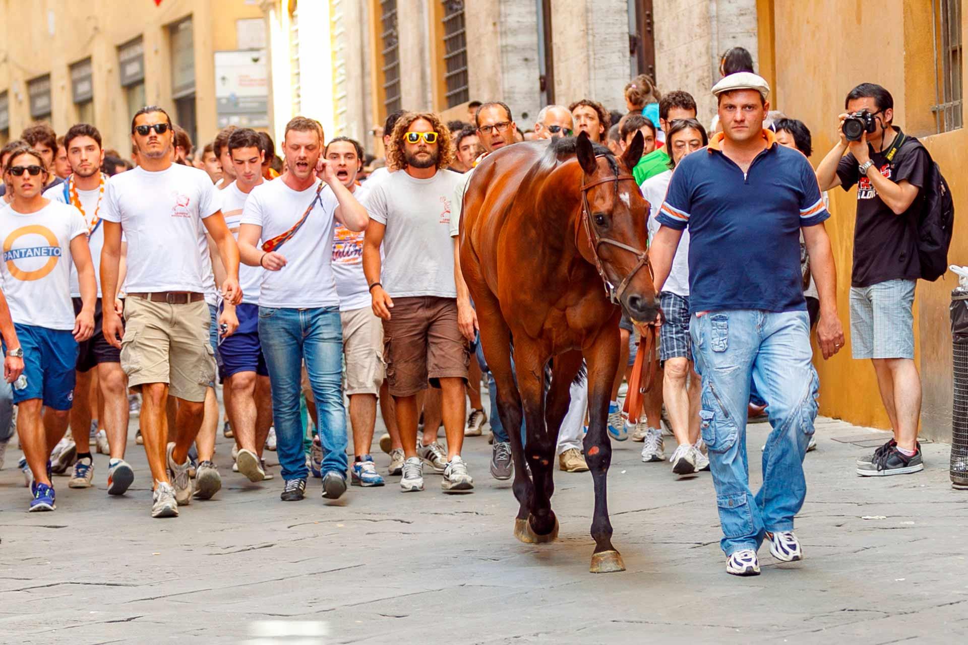 IL SORTEGGIO - B?rbero e Barbaresco, seguiti dai contradaioli che inneggiano i canti di contrada, si trasferiscono dalla Piazza alla stalla.